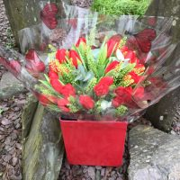 Red Tulips in Box