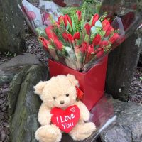Red Tulips in box with teddy bear