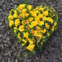 All yellow rose heart